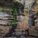 Glycosmis Falls, Pangali Cove, Koolama Bay