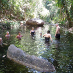 Rainforest water hole