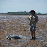 Turtle on Montgomery reef